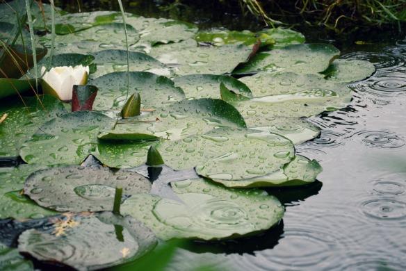 Rainy Pond